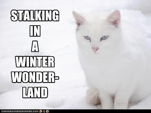 caption captioned cat christmas lyric meowy christmas parody rhyming song stalking title walking in a winter wonderland winter wonderland - 4282998272