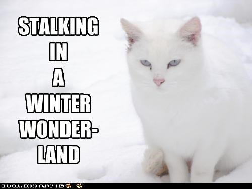 caption,captioned,cat,christmas,lyric,meowy christmas,parody,rhyming,song,stalking,title,walking in a winter wonderland,winter,wonderland