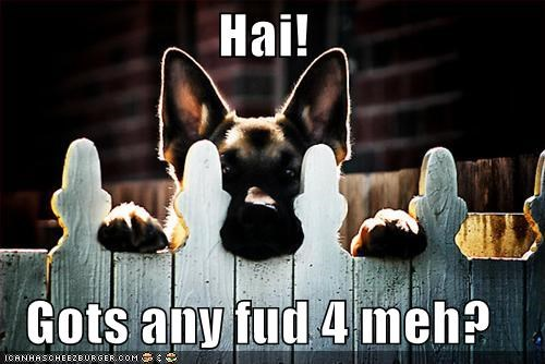 fence food german shepherd hai just curious ohai peeking question