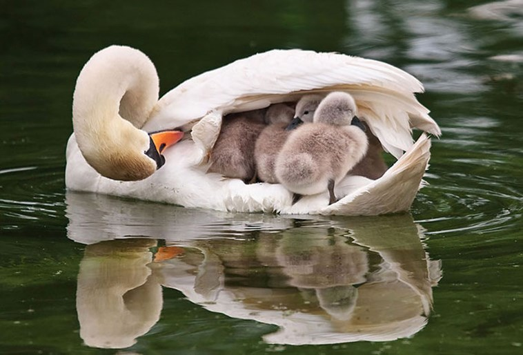 pretty photos of birds and their kids