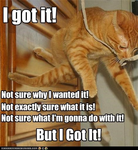 caption captioned cat excited got it not sure plans success tabby victory - 4283622656