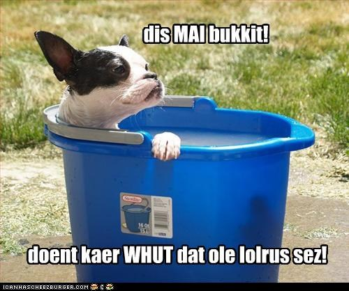 boston terrier bukkit dont-care lolrus lounging mine ownership possession smug story - 4284105216