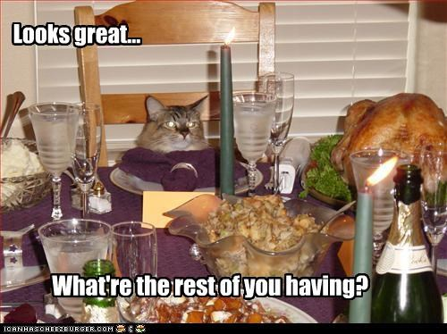 caption captioned cat dinner excited food glutton gluttony greed meal noms question rhetorical sarcasm