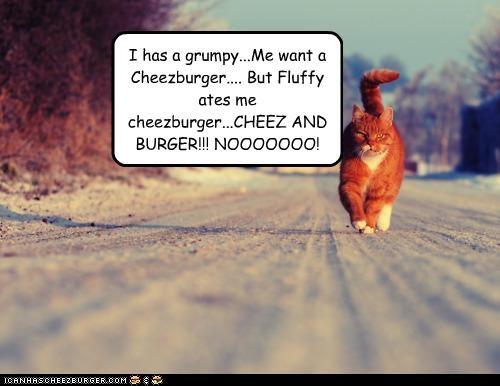 Cheezburger Image 4284407296