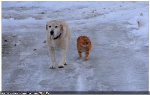 dogs,goggies,goggies r our friends,holidays,Interspecies Love,snow,stroll,walking,winter