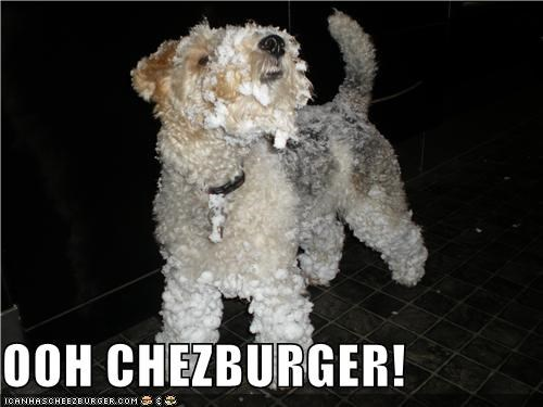 Cheezburger Image 4284751360