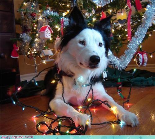 cute dogs lights - 4284912384