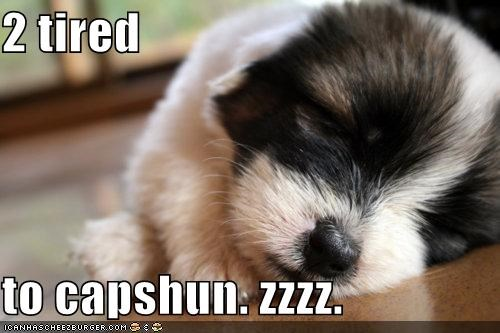 caption,cute,exhausted,puppy,sleeping,tired,whatbreed