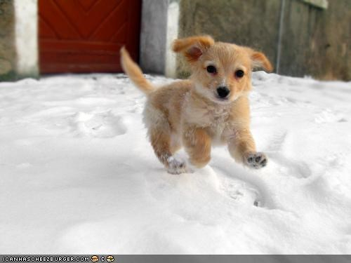 cyoot puppeh ob teh day excited frolicking labrador mixed breed playing puppy snow