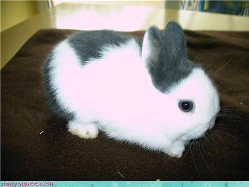 baby bunny happy bunday pet reader squee - 4285377536