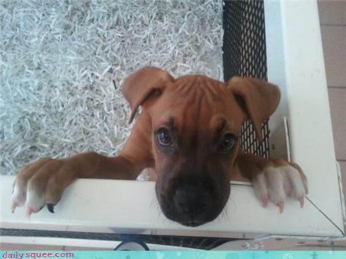cute eyes face puppy - 4285450240