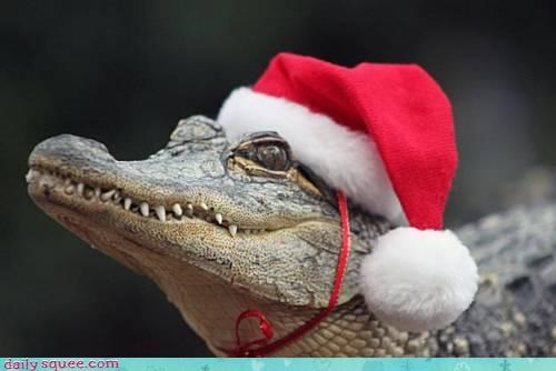 acting like animals,christmas,crocodile,hat,merry christmas,santa,santa hat