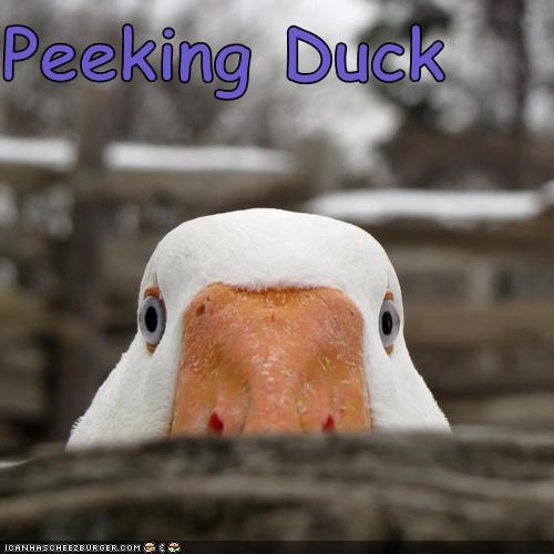 action,caption,captioned,duck,food,homophone,literalism,noms,peeking,peking