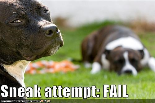 attempt,attempting,FAIL,failing,failure,pit bull,pit bulls,pitbull,pitbulls,sneak,sneaking