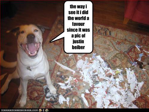 Cheezburger Image 4286322176