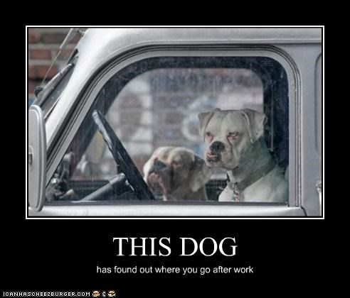 THIS DOG has found out where you go after work