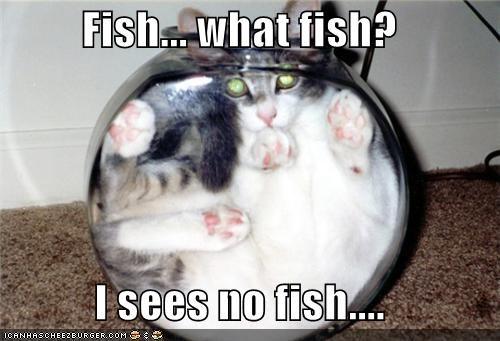 Fish... what fish?  I sees no fish....