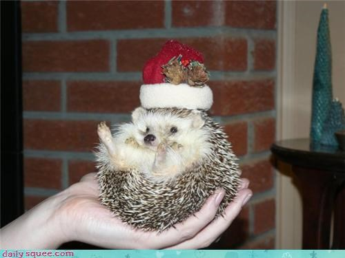 christmas,hedgehog,user pet