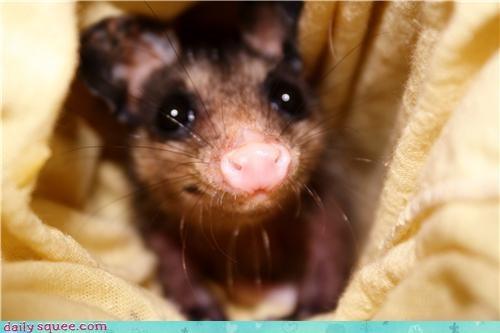 cute user pet - 4287238144