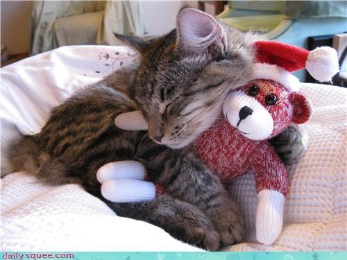 cat cute nap sleep - 4287468544