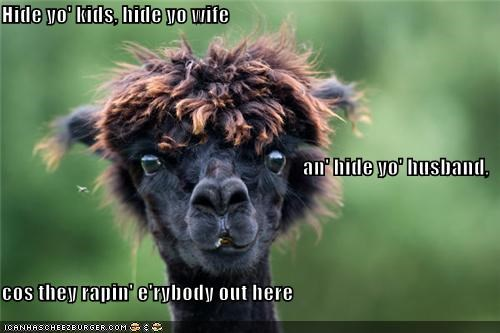 animals,bed intruder,critters,hide yo kids,llama,wife