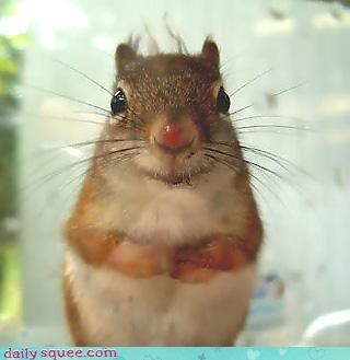 boop cute nose squirrel - 4288167680