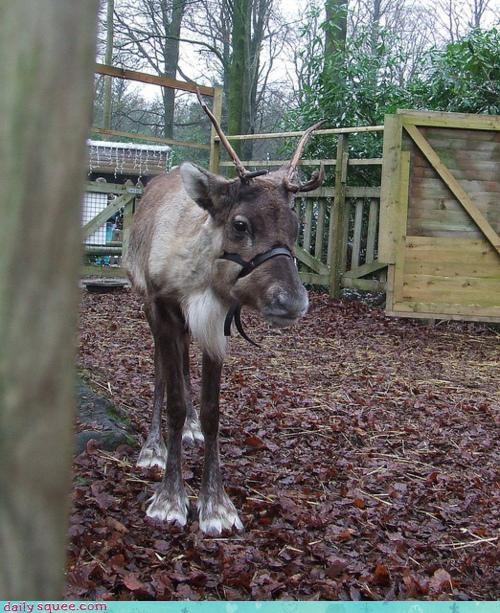 deer nerd jokes Pokémon reindeer season squee spree - 4288753920