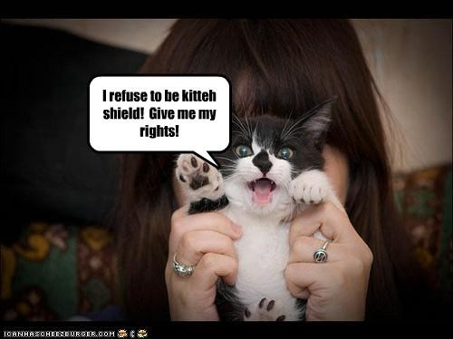 I refuse to be kitteh shield! Give me my rights!