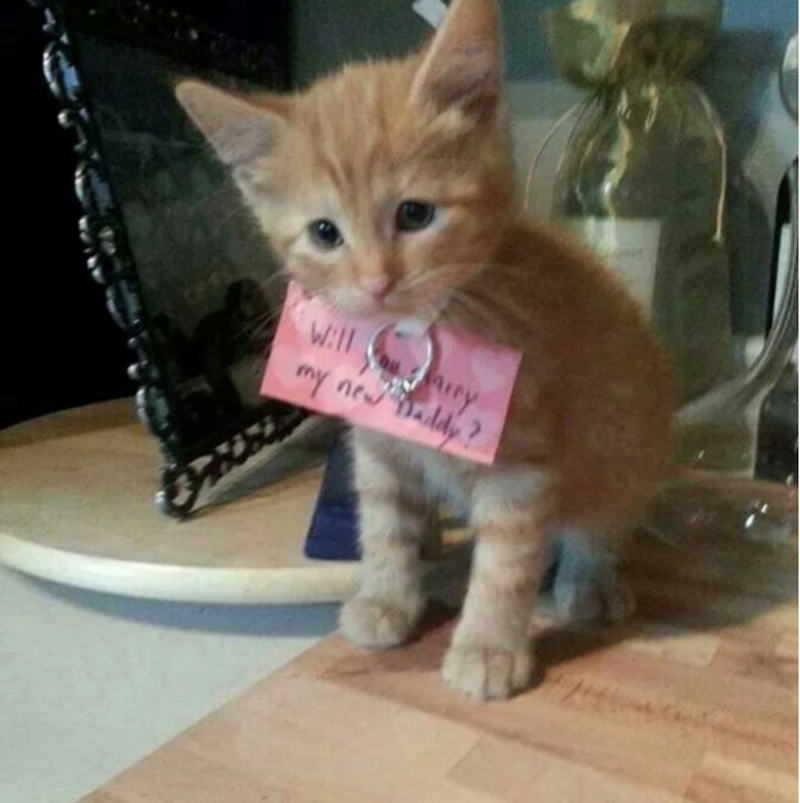 a cute list of animals helping with proposals