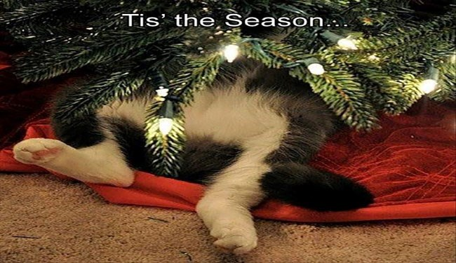 a funny list of cats giving the 12 days of christmas