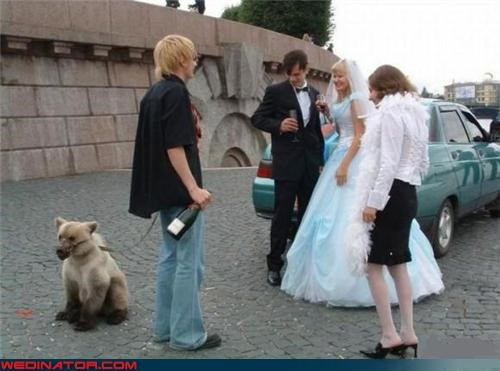 animal friendly wedding bride confusing funny wedding photos groom miscellaneous-oops ring bearer ring bear-er russia Russian wedding surprise technical difficulties wedding party wtf wtf is this - 4290454784