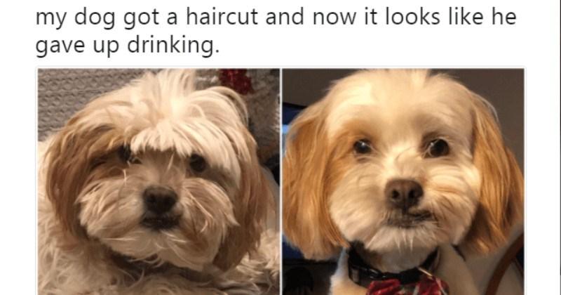 best animal tweets