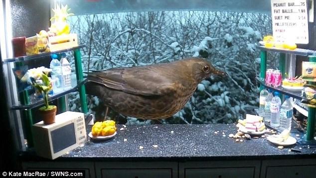 snack bar for birds in a garden