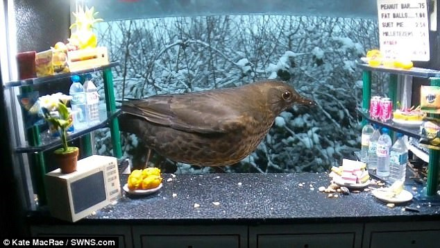 snack bar for birds in a garden