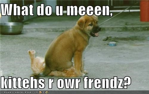 confused disagree do not understand friend friendship Hall of Fame kittehs puppy what do you mean whatbreed