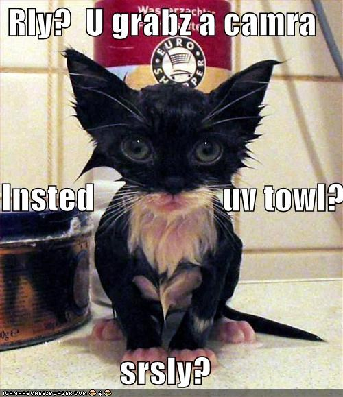 bath,camera,captioned,cat caption,disbelief,kitten,really,seriously,shock,towel,upset,wet