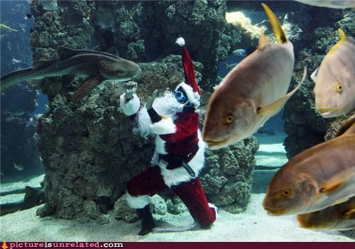 fish living the dream punching fish santa santa claus underwater what i wanted to do as well wtf - 4291417344