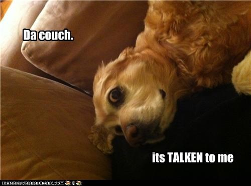 amazed cavalier king charles spaniel confused couch freaked out realization story talking - 4291546368