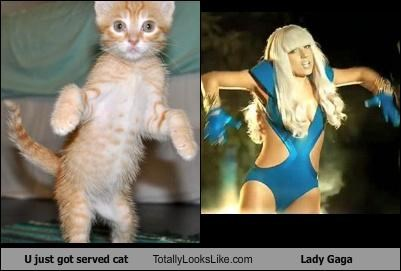 Cats,dance,lady gaga,poker face,u just got served