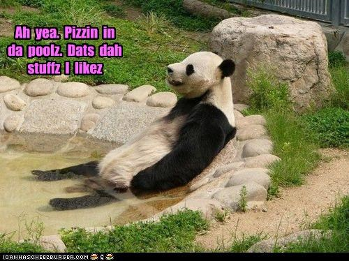 Cheezburger Image 4291885824