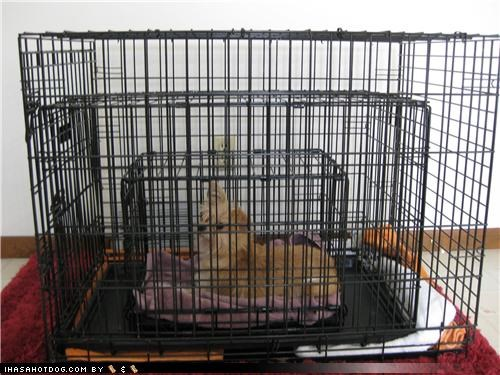 crate Hall of Fame mixed breed Sad security terrier - 4291949568