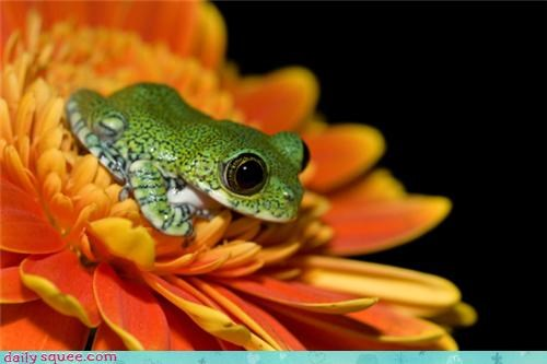 amphibian big eyes Flower flowers frog frogs Hall of Fame petals squee tiny
