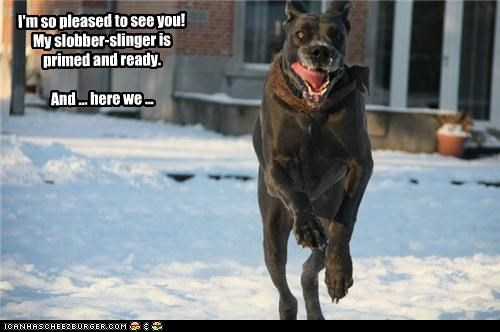 I'm so pleased to see you! My slobber-slinger is primed and ready. And ... here we ...