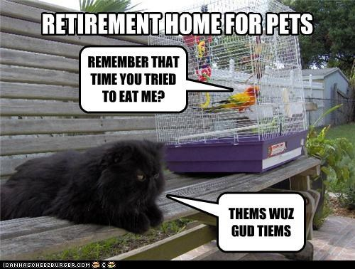 bird caption captioned cat cockatiel home nostalgia pets reminiscing retirement retirement home stories