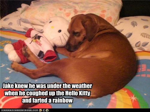 afraid coughing Hall of Fame hello kitty labrador rainbow sick symptoms under the weather weird - 4293788416
