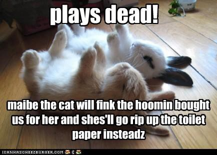 plays dead! maibe the cat will fink the hoomin bought us for her and shes'll go rip up the toilet paper insteadz