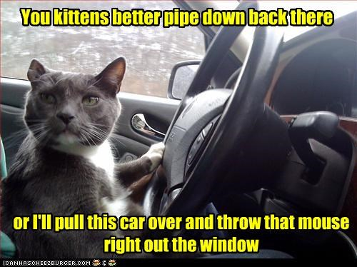 You kittens better pipe down back there or I'll pull this car over and throw that mouse right out the window