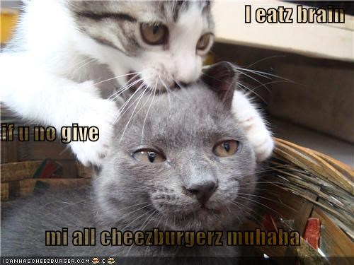 Cheezburger Image 4295363072