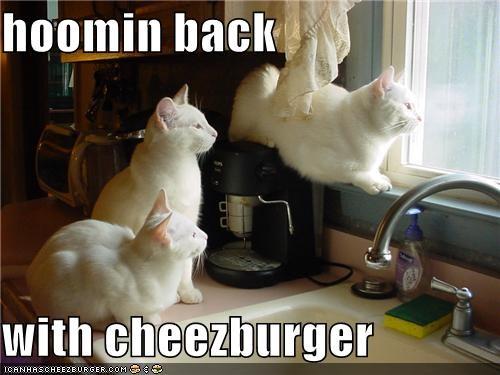 Cheezburger Image 4296128256