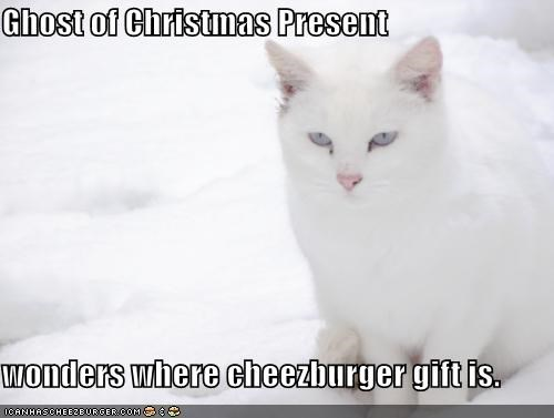 Cheezburger Image 4296430336